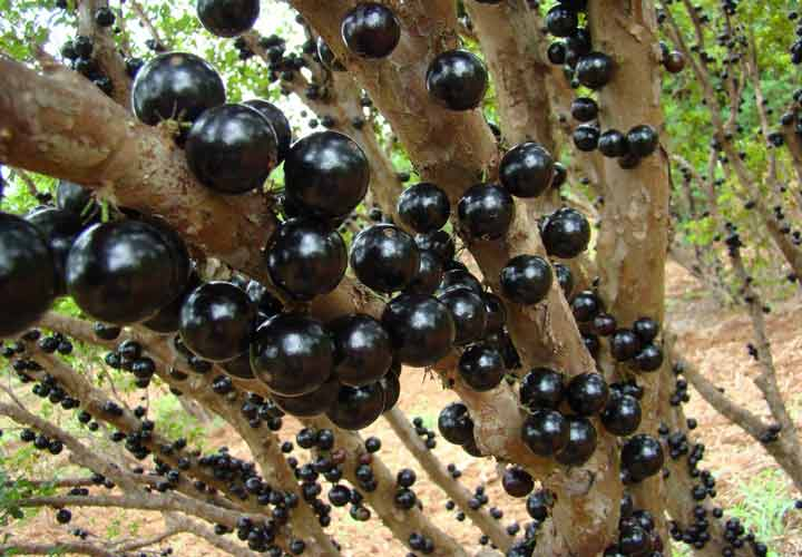 عجیبترین میوههای دنیا و خواص آنها