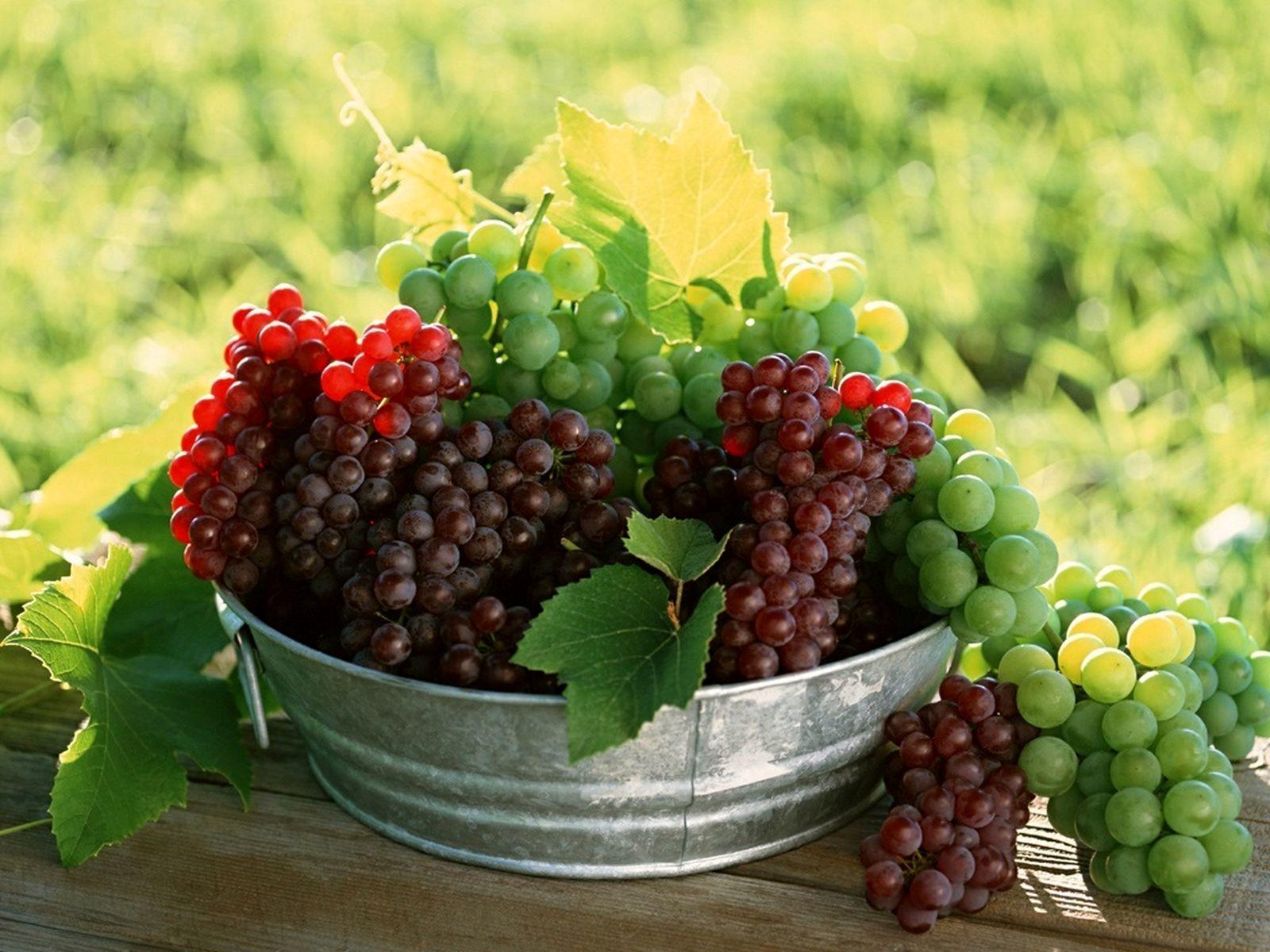چربیسوزی کدام میوه زیاد است؟