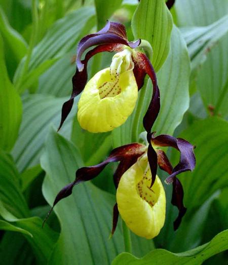 گلهاي خاص و کمياب