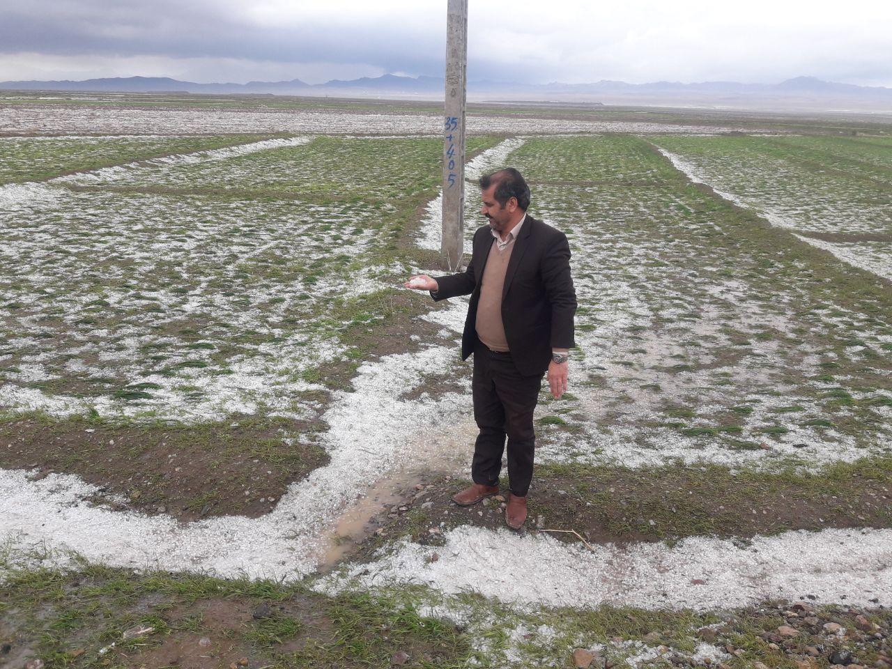 خسارت 22 میلیارد تومانی سرما و سیل به باغهای زاوه