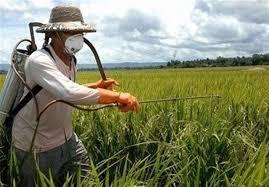 مبارزه با بیماریهای غلات در خراسان رضوی