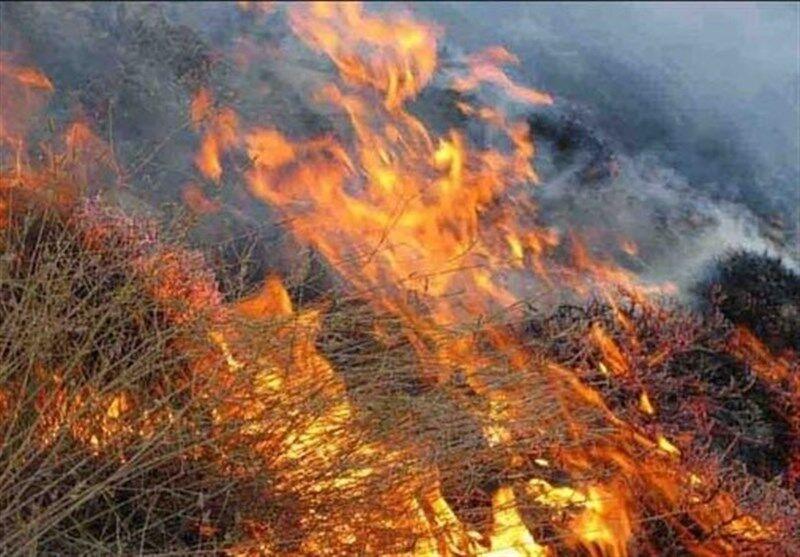 ادامه آتش سوزی در جنگلهای رستم