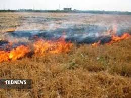 مهار آتش سوزی در مراتع مهاباد