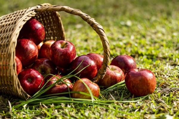 تنظیم هورمونهای بدن با خوراکیها