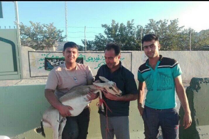اقدام جالب یک جوان دوستدار محیط زیست در استان فارس