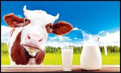 غذاهای حساسیتزا کدامند؟