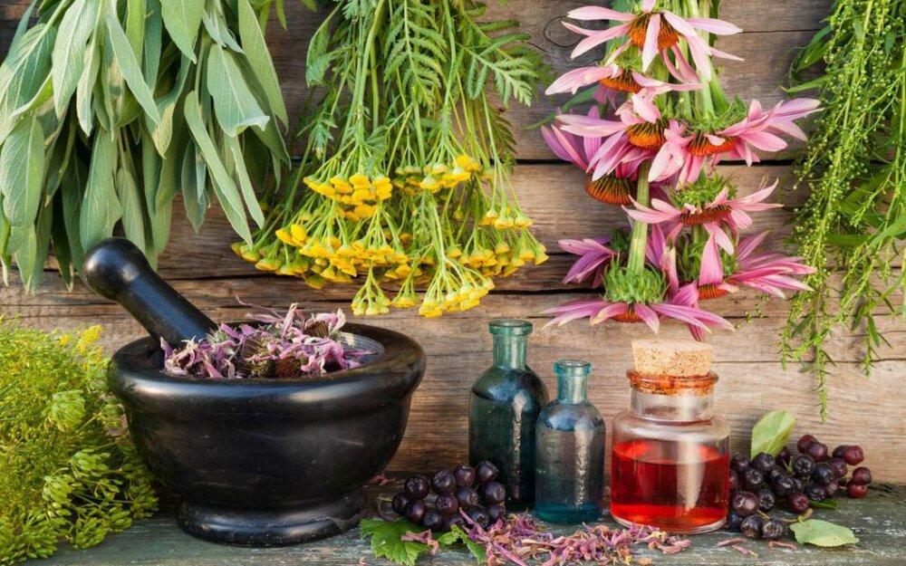 تاثیر گیاه برنجاسپ در درمان کرونا