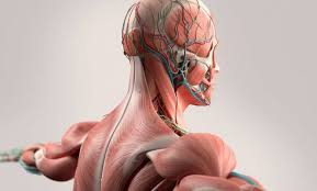 حقايق شگفت انگیز درباره بدن انسان
