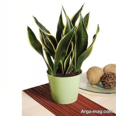 آشنایی با گیاهان آپارتمانی سایه دوست