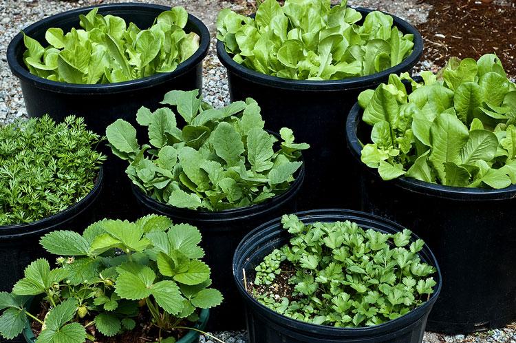 چگونه در خانه سبزی خوردن بکاریم؟