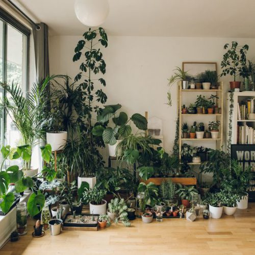 کدام گل آپارتمانی را در منزلمان پرورش دهیم؟