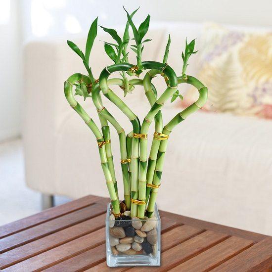 روش نگهداری گیاه بامبو