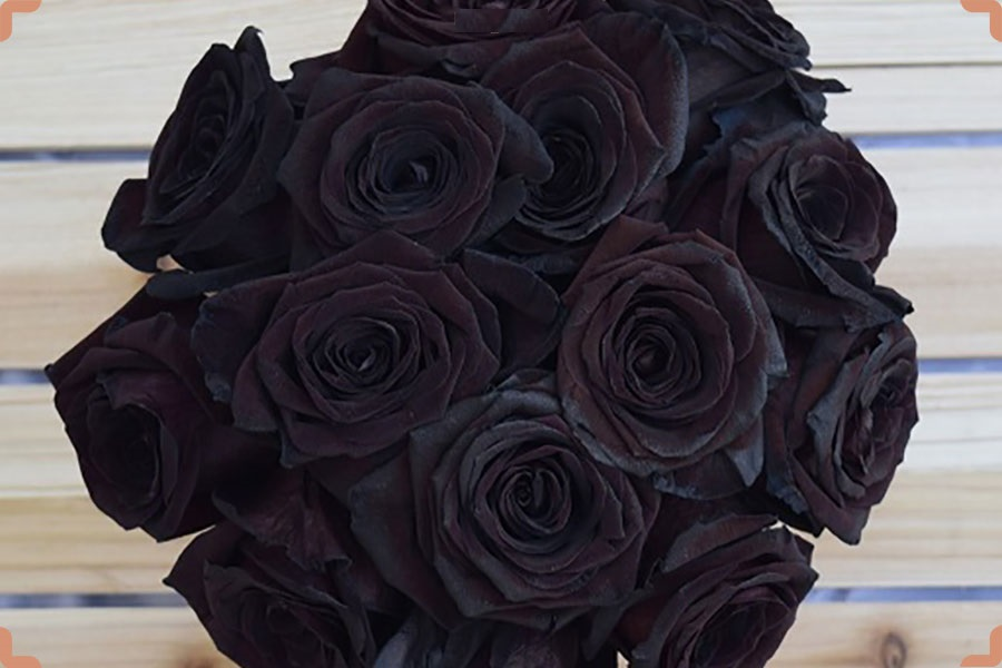 روش تولید گل رز سیاه!