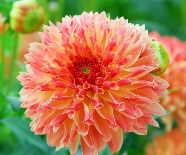 ترفندهای عجیب برای تازه نگه داشتن گل