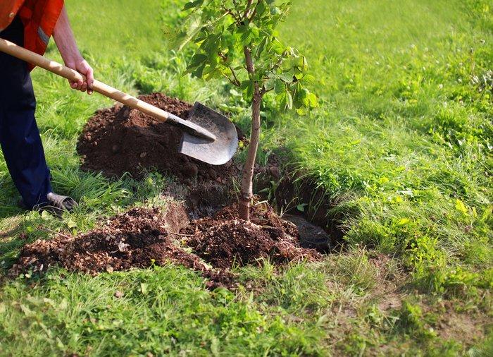 درختکاری در زمینهای ملی املش
