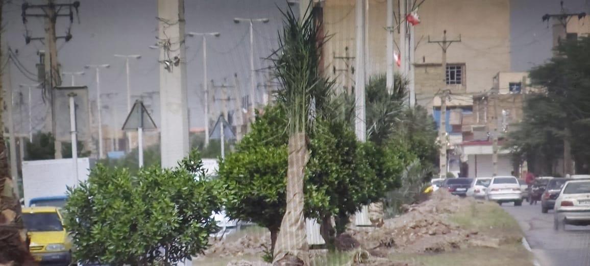 کاشت نخل در بلوارهای اصلی شهر آبادان