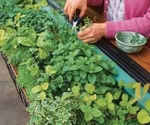 نحوه کاشت سبزی ارگانیک در خانه