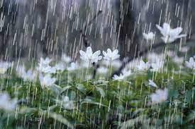 پیش بینی بارشهای رگباری از امشب در خراسان شمالی