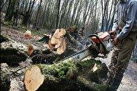 بازداشت سوداگر درختان هیرکانی در نور