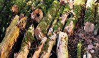 سوداگران جنگل در دام پلیس بهشهر