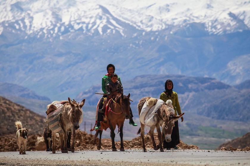 آوای دلنشین کوچ عشایر آذربایجان غربی / زندگی با طعم طبیعت