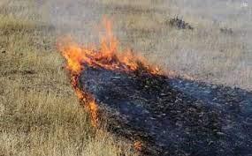 آتش سوزی پوشش گیاهی منطقه گلچین گلباف