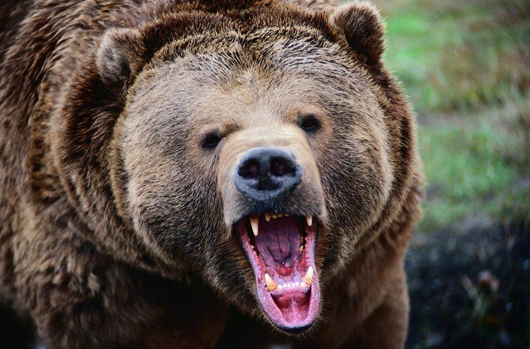 حمله خرس وحشی به عشایر منطقه بازفت