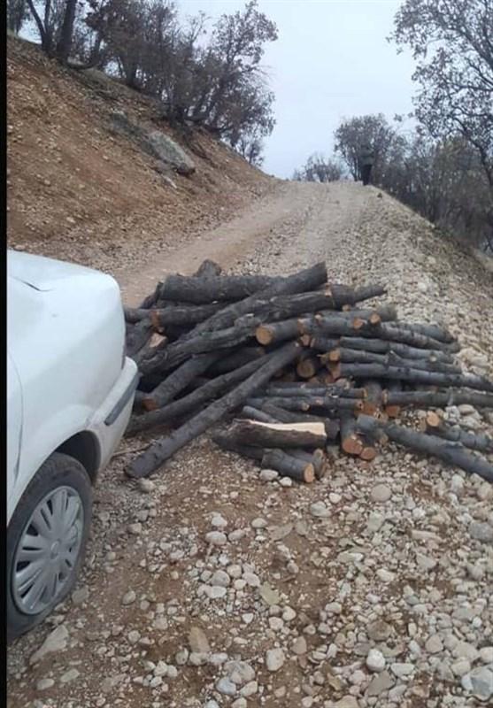 دستگیری قاچاقچیان درختان پارک ملی دز
