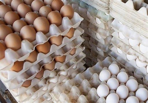 ابلاغ مصوبه واردات تخم مرغ نطفه دار گوشتی