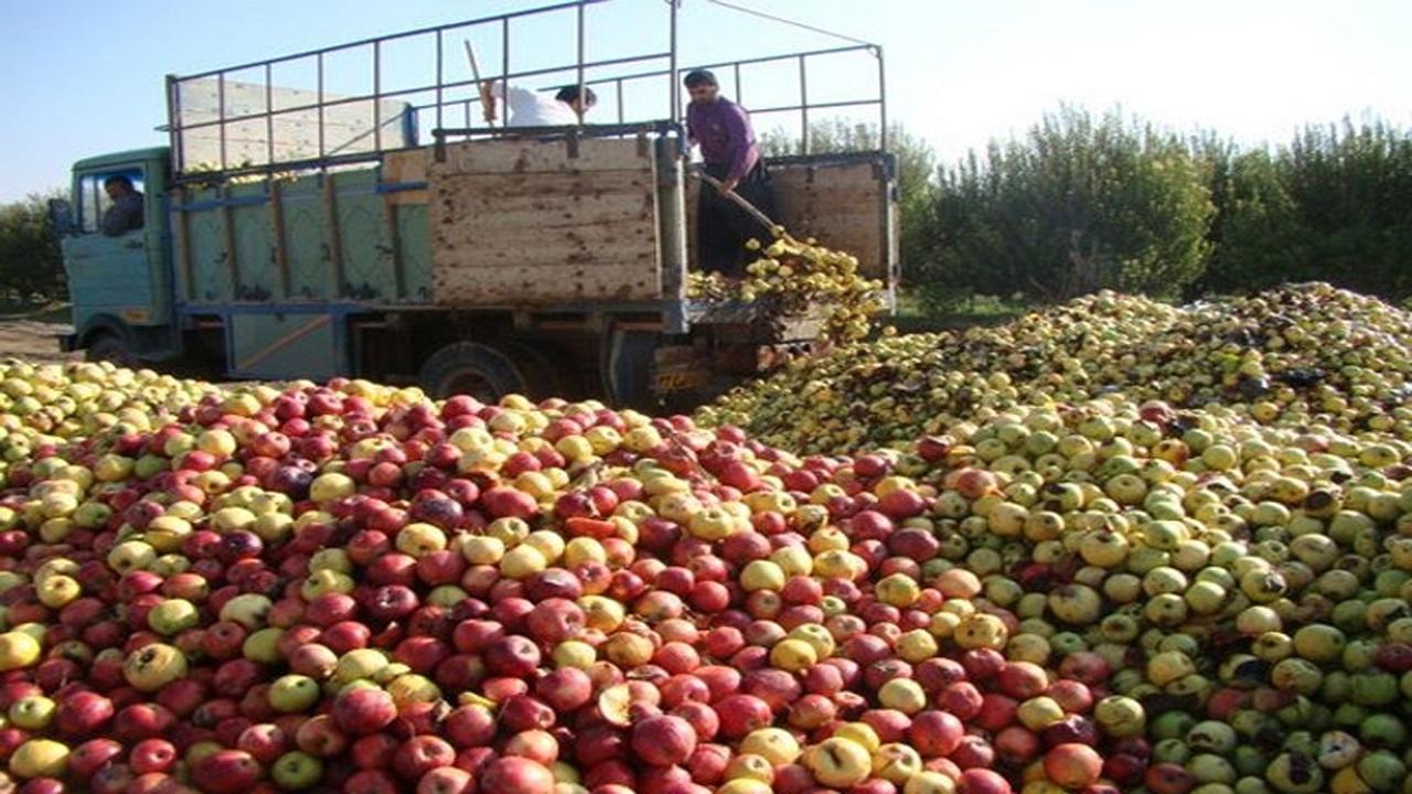 حتی آخرین کیلو از سیب صنعتی نیز خریداری می شود