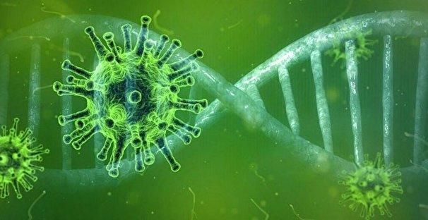 آیا احتمال بومی شدن ویروس کرونا وجود دارد؟