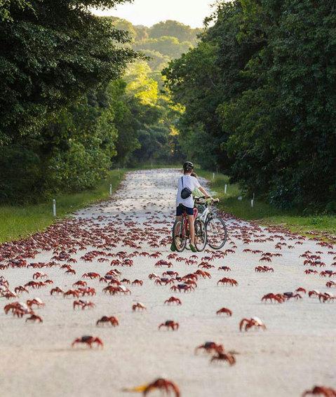مهاجرت خرچنگ ها