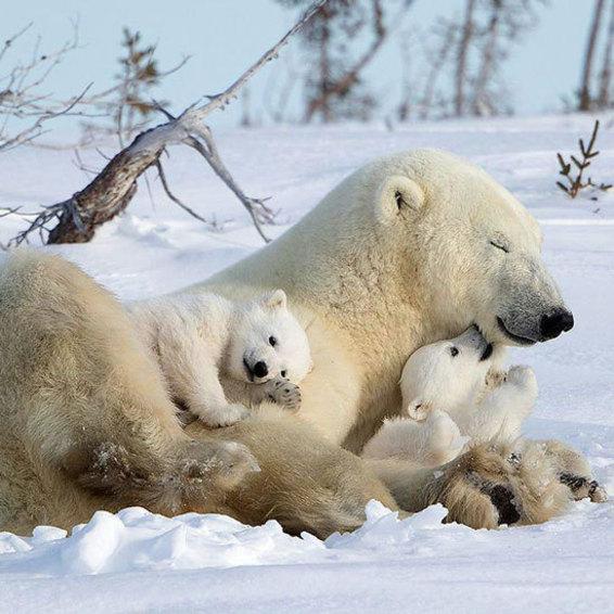 آرامش در کنار مادر
