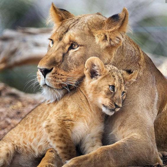 مادر و فرزند