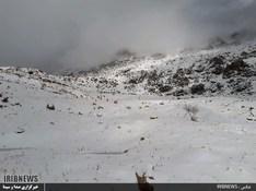thm 3115865 861 - بارش برف در سپیدان + عکس