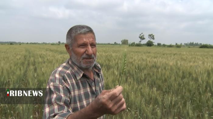 سود دست رنج کشاورز در جیب دلال ها