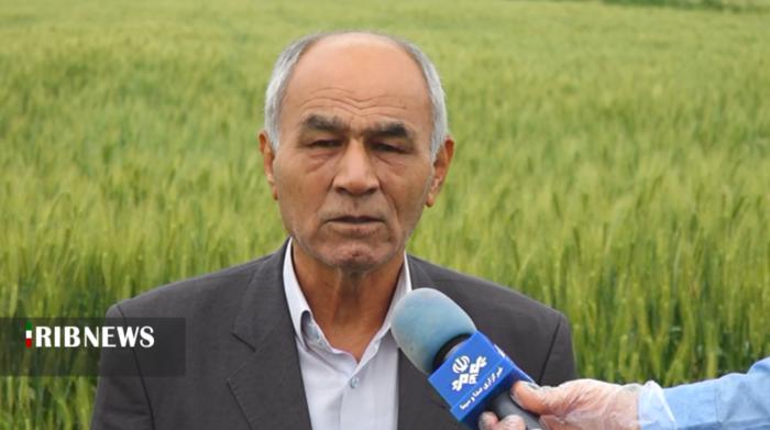 علی قلی ایمانی، نائب رئیس بنیاد ملی گندمکاران کشور: زنگ خطری برای تامین گندم مورد نیاز کشور/ مدیریت بهتر و نظارت جدی تر = سود کشاورز و استمرار در خودکفایی تولید گندم